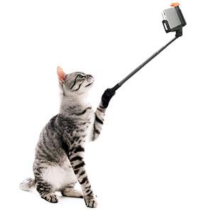 次回は猫のフォトコンだよ