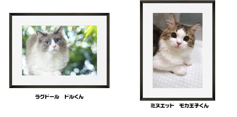 にゃんフォトコンテスト PS保険賞