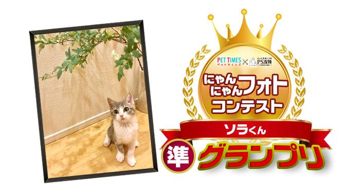 にゃんフォトコンテスト 準グランプリ
