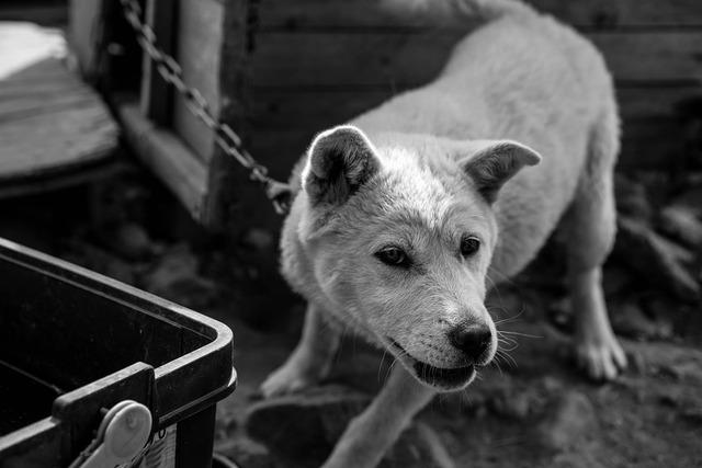 飼い主必見!首輪が犬に与える影響