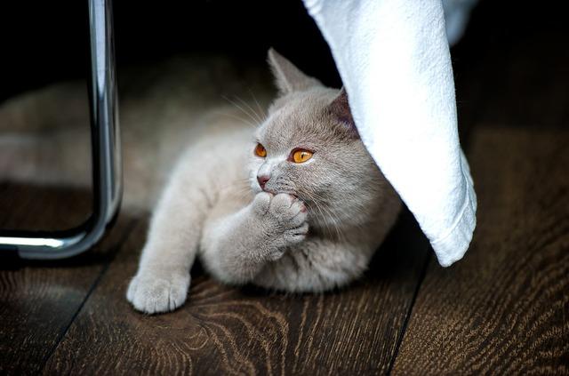 にゃんでだろう?ネコが秋に食欲旺盛になる理由