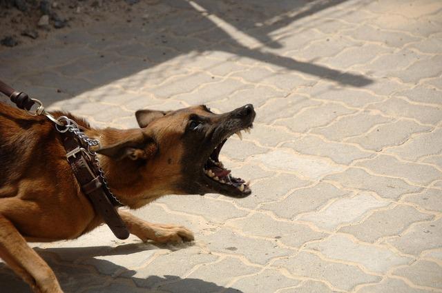 吠える犬の気持ちとしつけ