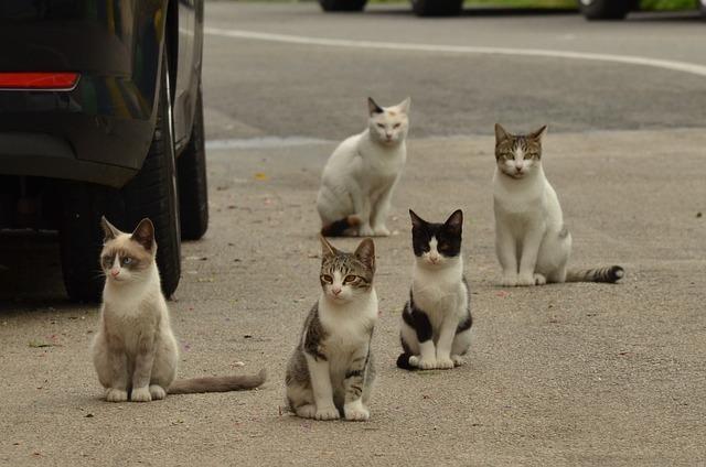 実は猫の鳴き声には意味がある!