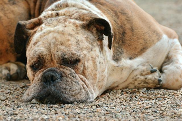 愛するワンちゃんのためにも知っておこう!犬に多い病気5選