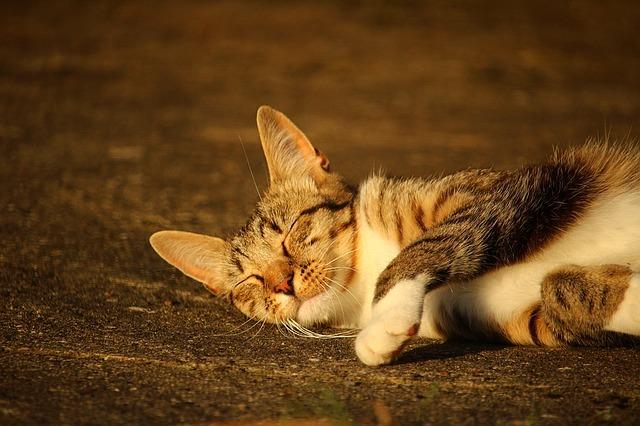 鳴いてるけど聞こえない!ネコのサイレントニャーの謎