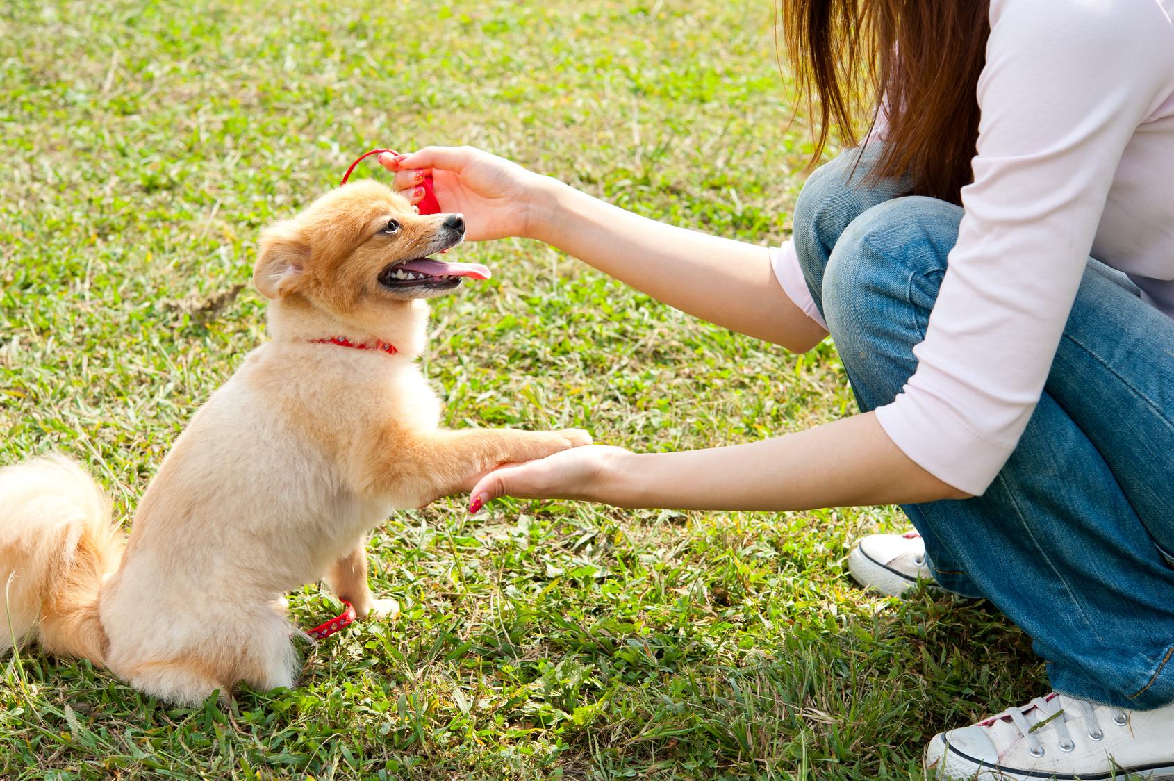 ワンちゃん大興奮!関東で犬が喜ぶお出かけスポット