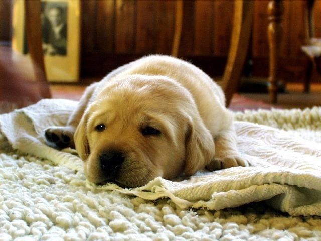 犬を飼いたい方必見!後悔しない犬の選び方