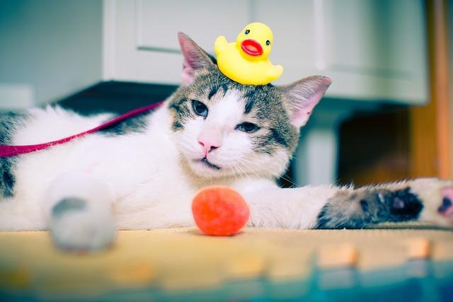 意外と知らない!猫のシャンプー頻度と方法