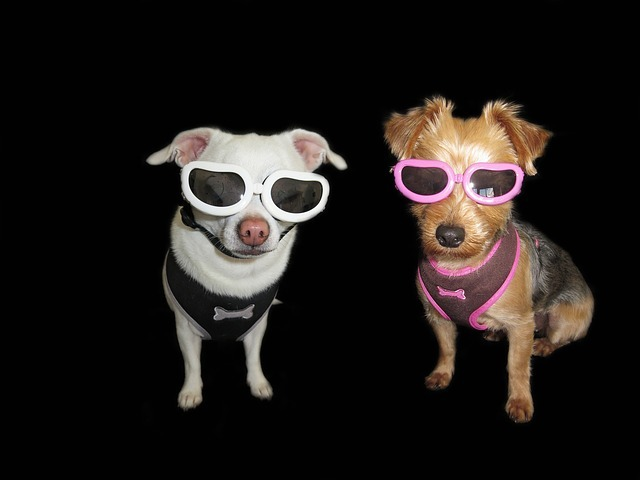 ワンちゃんもオシャレする時代!体調管理にもなる愛犬ファッション