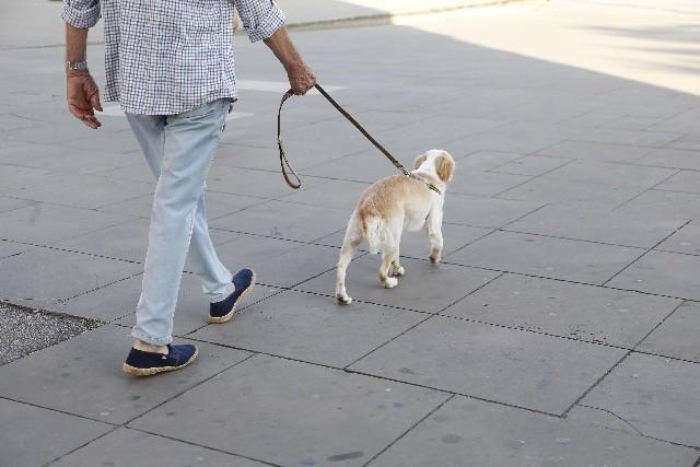 ワンちゃんが散歩の途中で歩かなくなる原因
