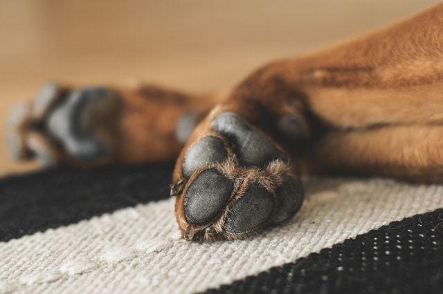犬の肉球はとっても敏感!保湿クリームで冬の乾燥対策
