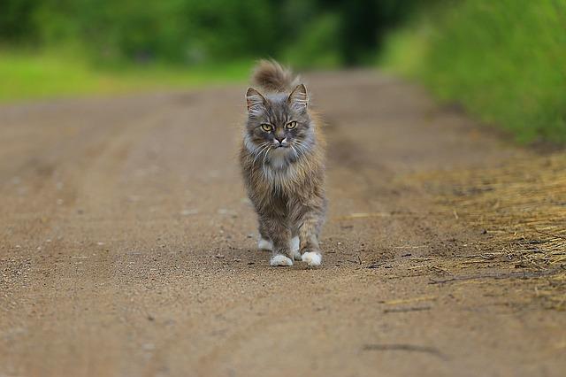 猫は散歩好き?ネコちゃんを外に出すときの注意点