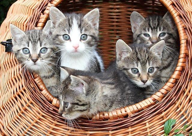 ネコちゃんのお気に入り!100均グッズで猫ちぐらを作ろう!
