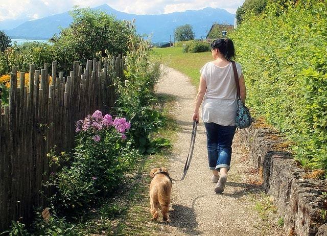 犬にとって散歩が必要な理由知ってますか?