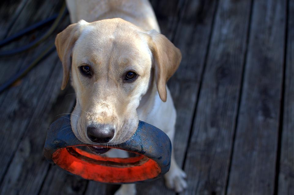怒らないで!収集癖は犬が持つ野生の本能なんです!