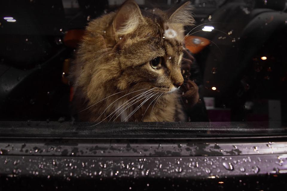 ネコちゃんと一緒にお出かけする時のポイント
