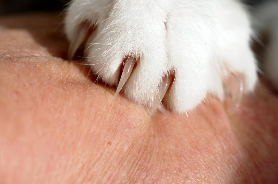 ネコちゃんに爪切りが必要な理由と上手な切り方