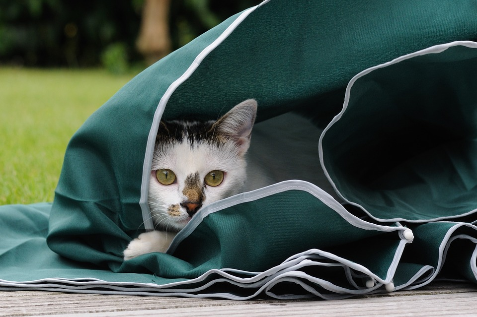 あれ?どこいった?ネコちゃんが家出したときの対処法