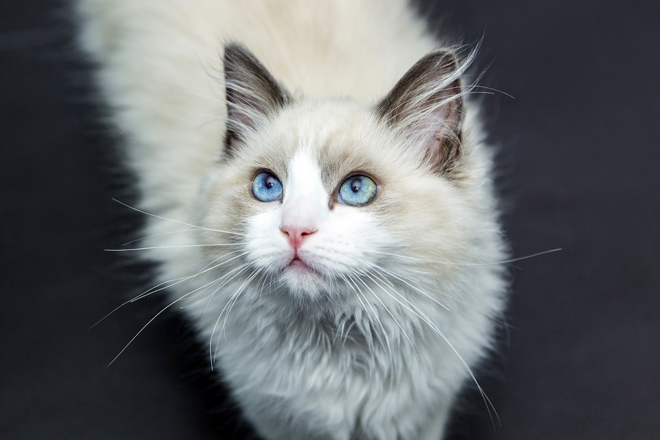 ネコちゃんにブラッシングが必要な理由とその方法