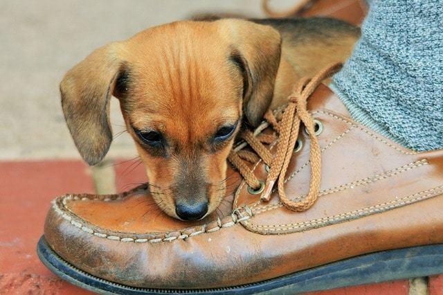 ワンちゃんが靴を隠す行動ってどんな意味があるの?