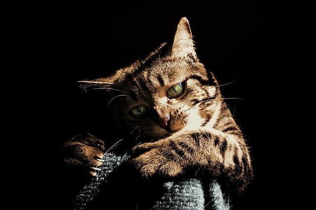 ネコちゃんの爪とぎグッズは意外と種類が豊富!