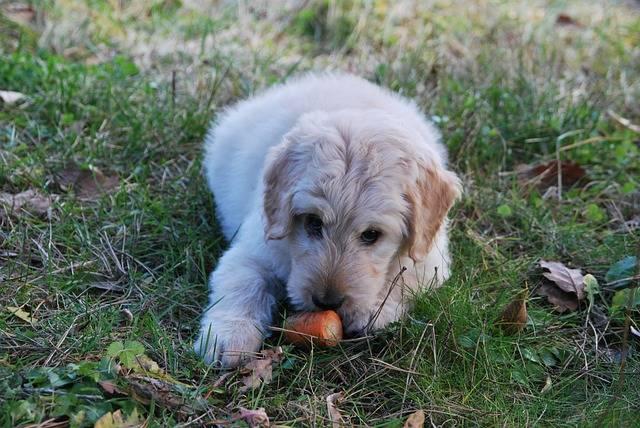 犬が食べれる野菜って?実はセロリが!ただし注意も・・・
