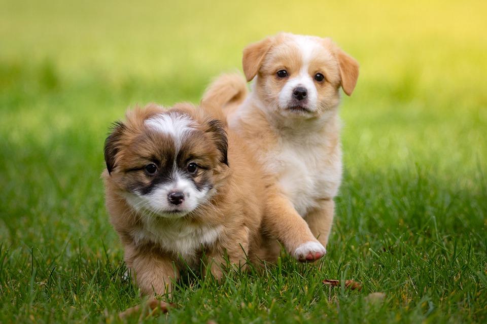 他の犬と出会えるパピーパーティーって知ってますか?