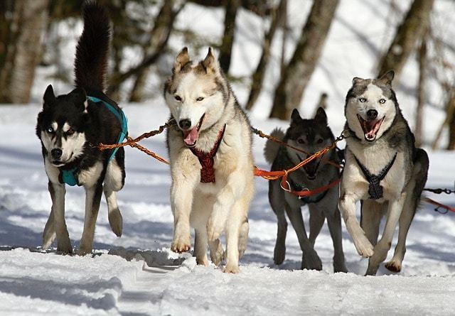 雪の日にワンちゃんとお散歩するときの寒さ対策