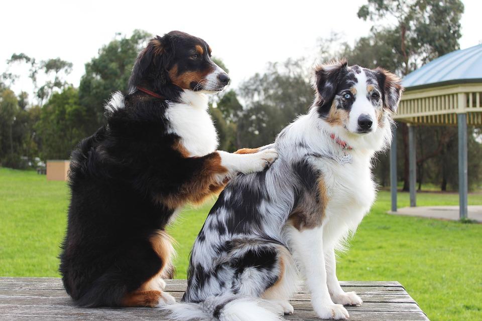 実は犬も肩こりになる?正しいマッサージでケアしてあげましょう!