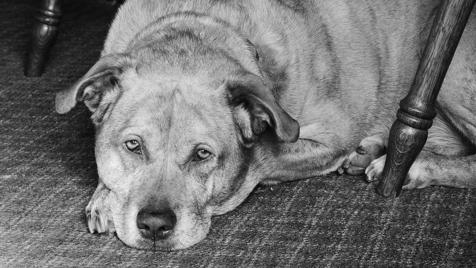 食欲不振の高齢犬に、食事を食べてもらう工夫