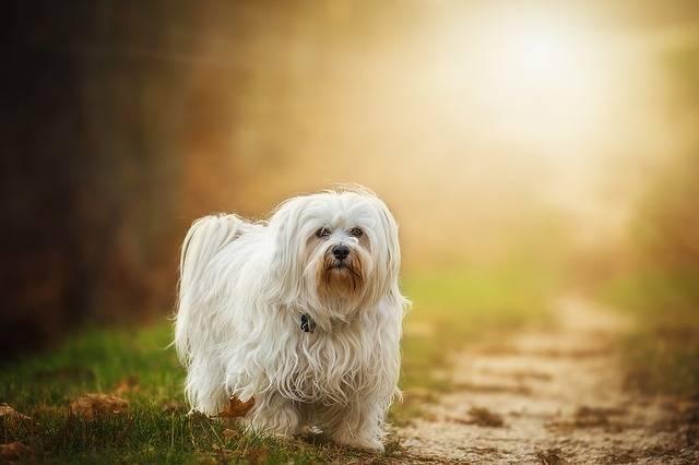 毛質に合わせて使い分けよう、犬用ブラシの使い方と選び方