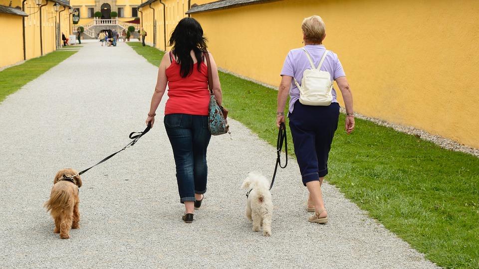 犬友達を作って、散歩仲間を増やしていこう!
