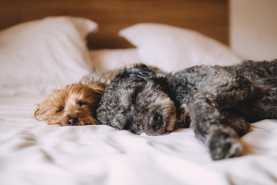 ワンちゃんと寝るなら、注意すべきこと5選