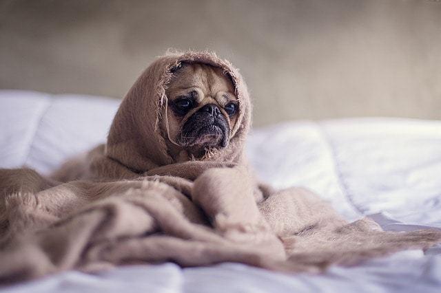 ワンちゃんの寒さ対策、食事で体を温めよう