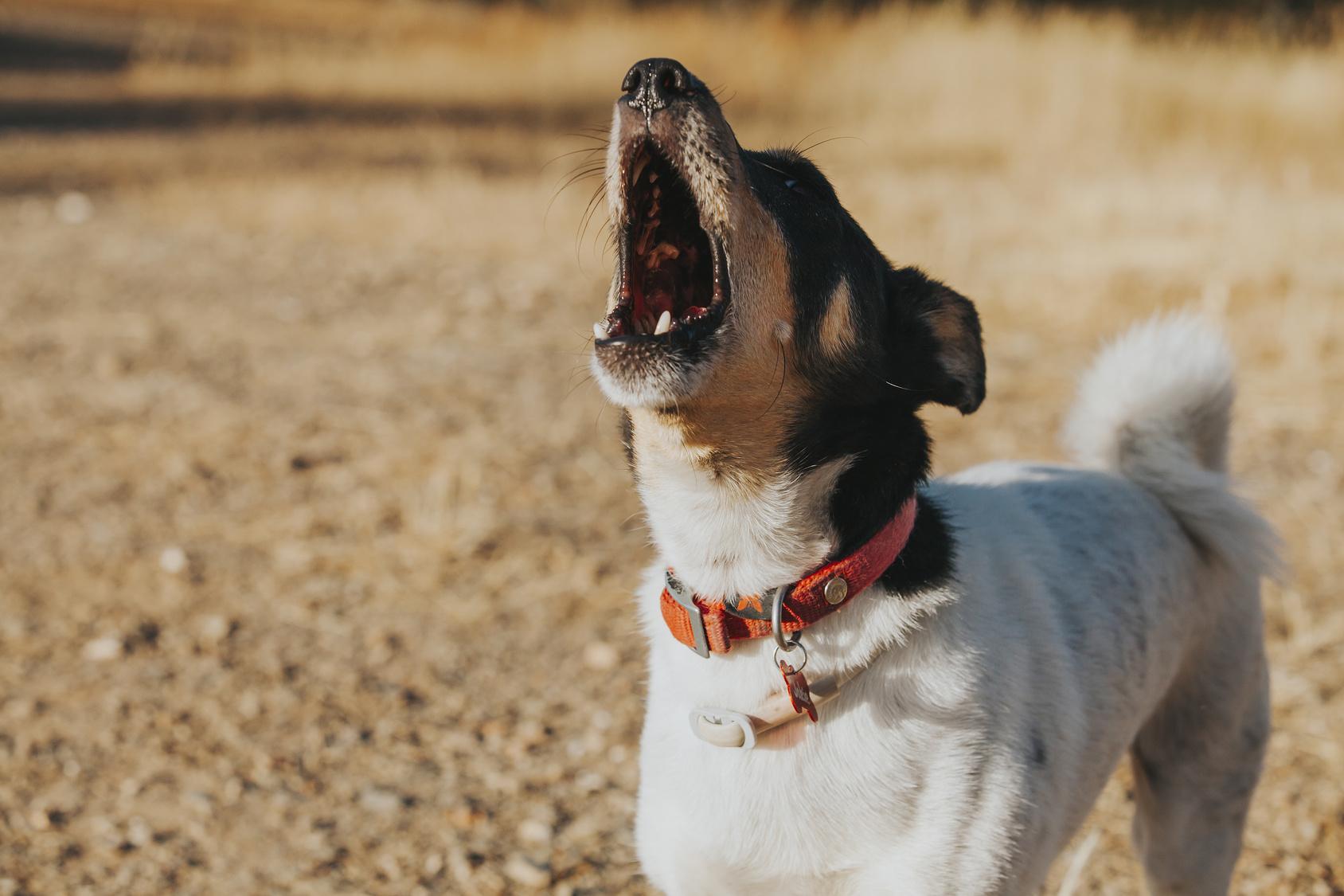 言葉を話せないからこそ気を付けたい!犬がストレスを感じている時の行動は?