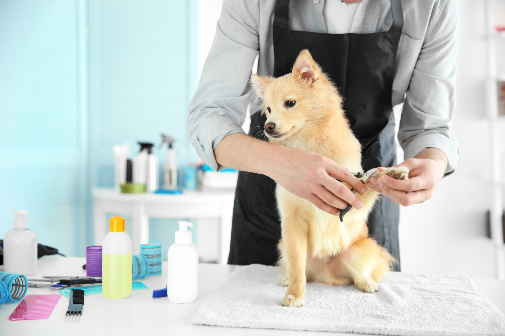 健康のケアのために!犬の爪の正しいケア方法