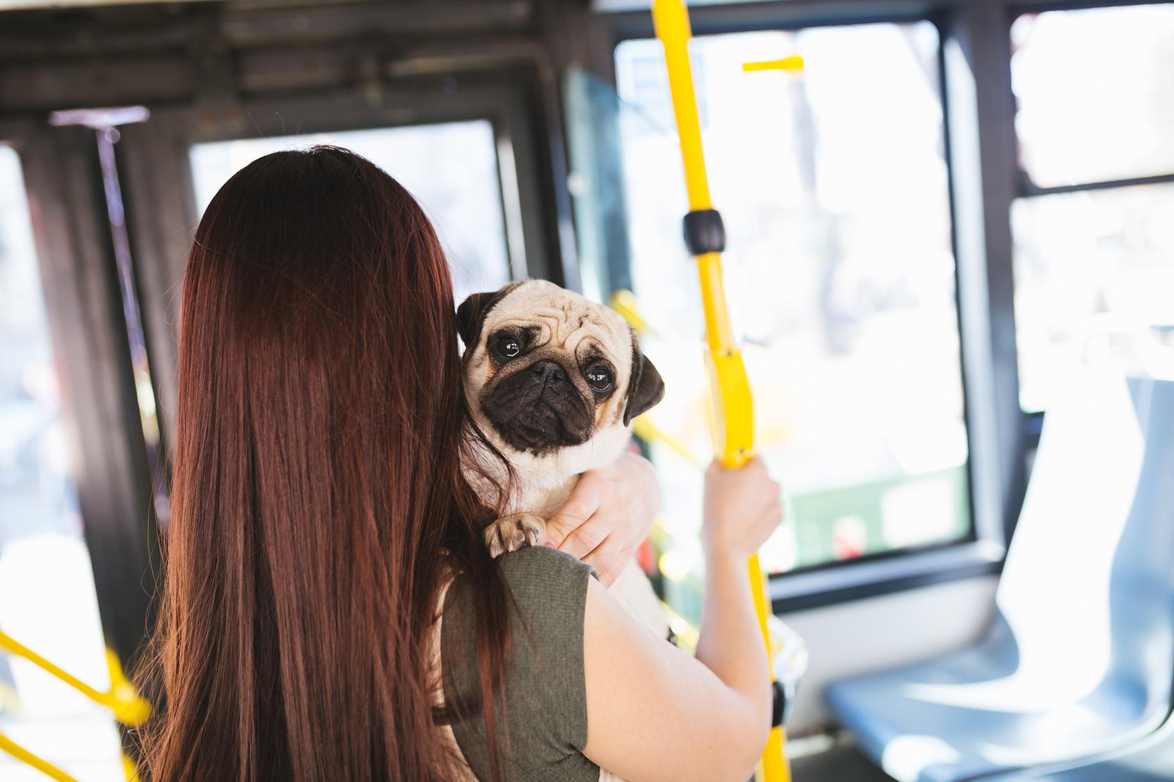 ペットとお出かけしたい!ペット同伴で電車やバスに乗る時の正しいマナー