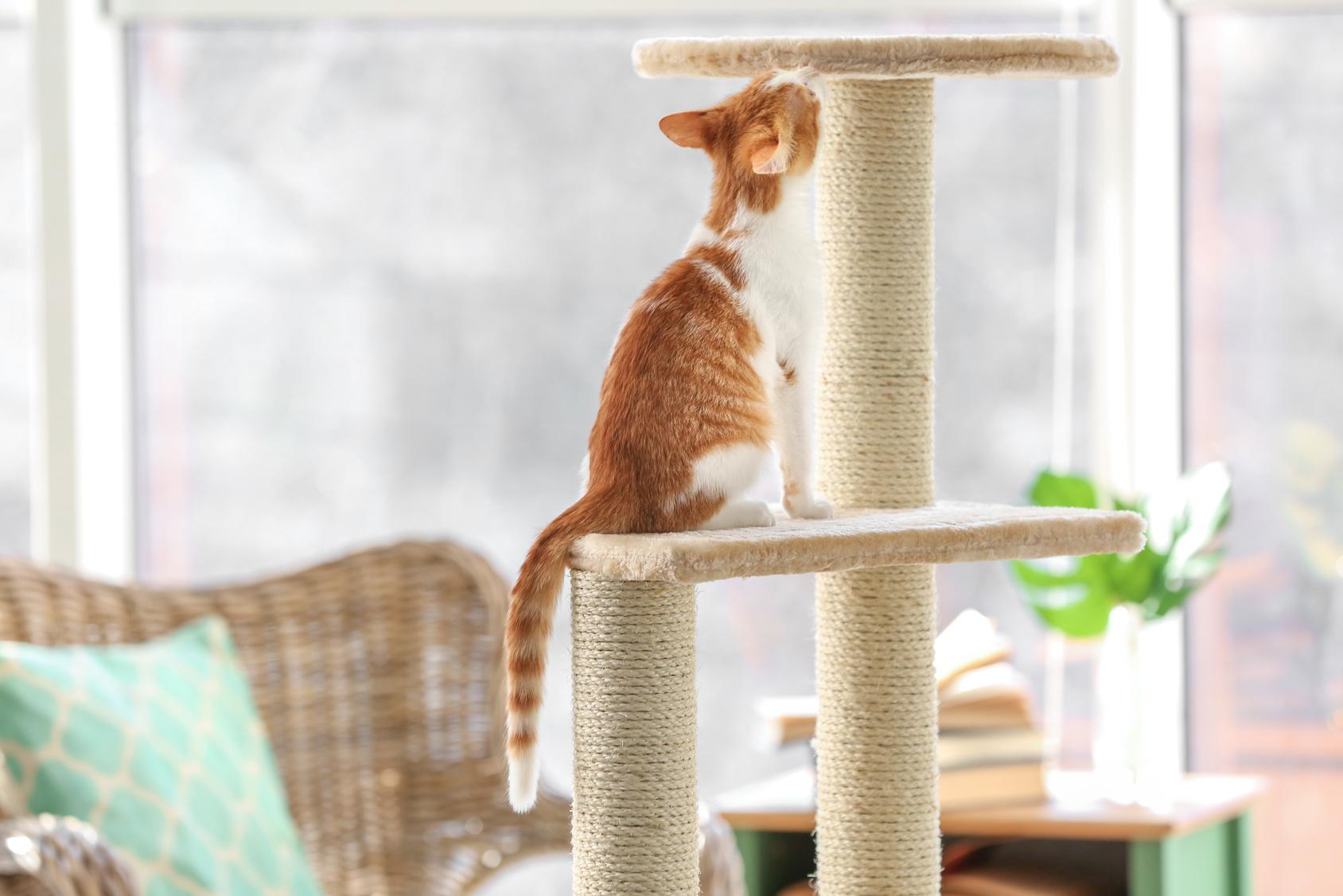 飼い主さんも憧れる!猫が喜ぶキャットタワーの選び方