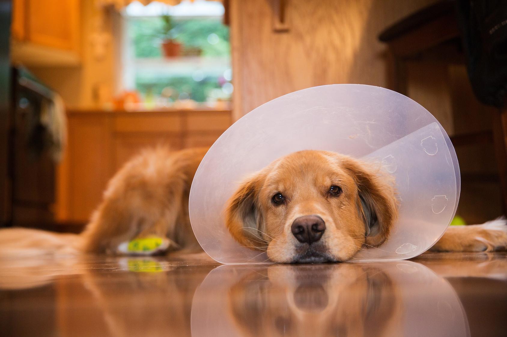 こんな症状があったら要注意!犬の膵炎について