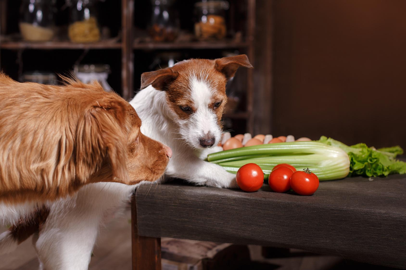 ワンちゃんになんでも食べさせてはダメ!犬が食べたら危険な食べ物