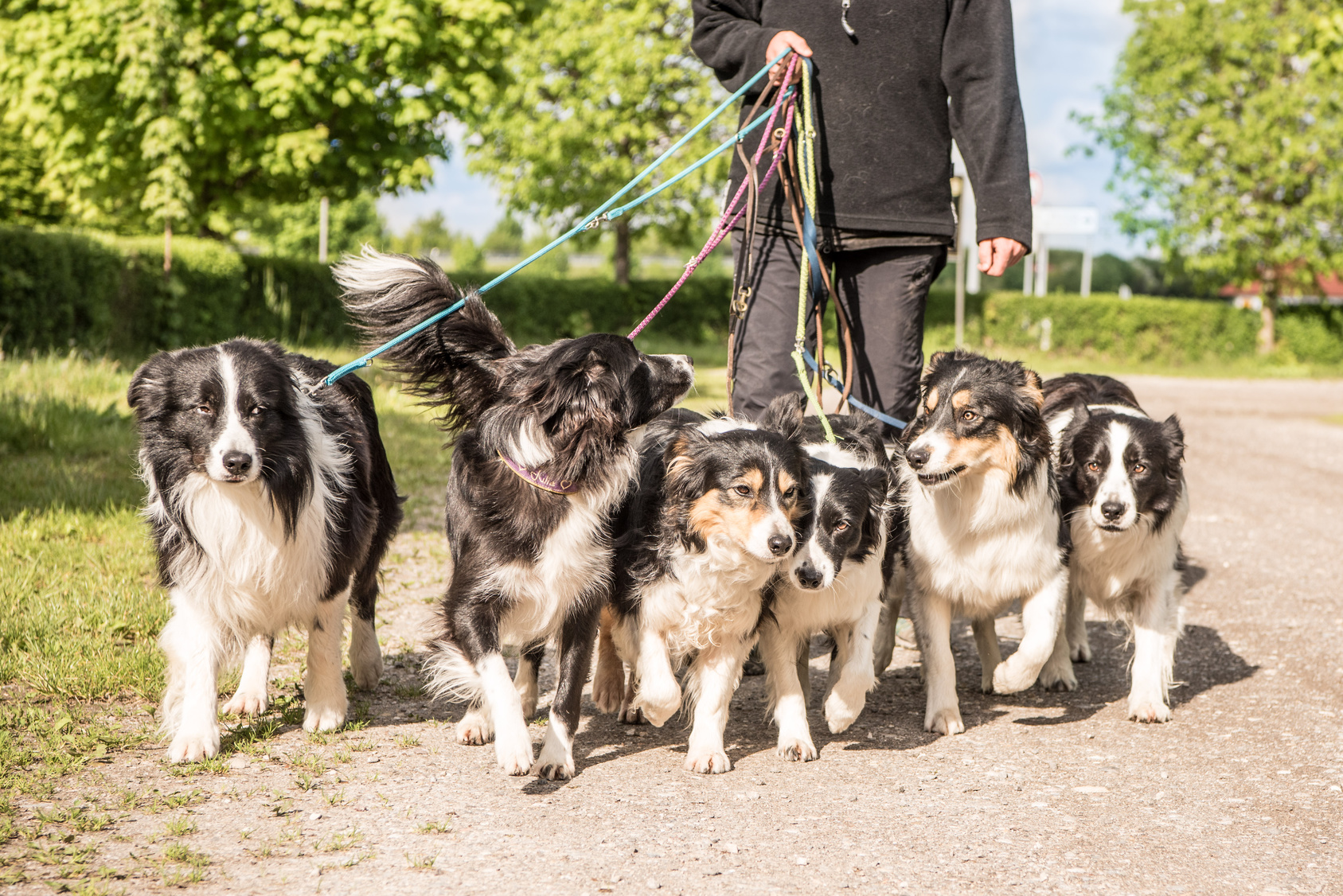 コミュニケーション能力が高い「多頭飼い」に向いている犬種とは?
