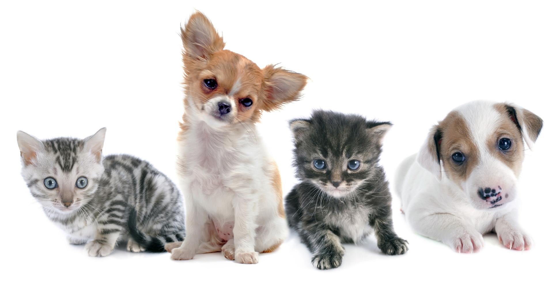 初めてペットを飼う方でも安心して飼えるおすすめのペット