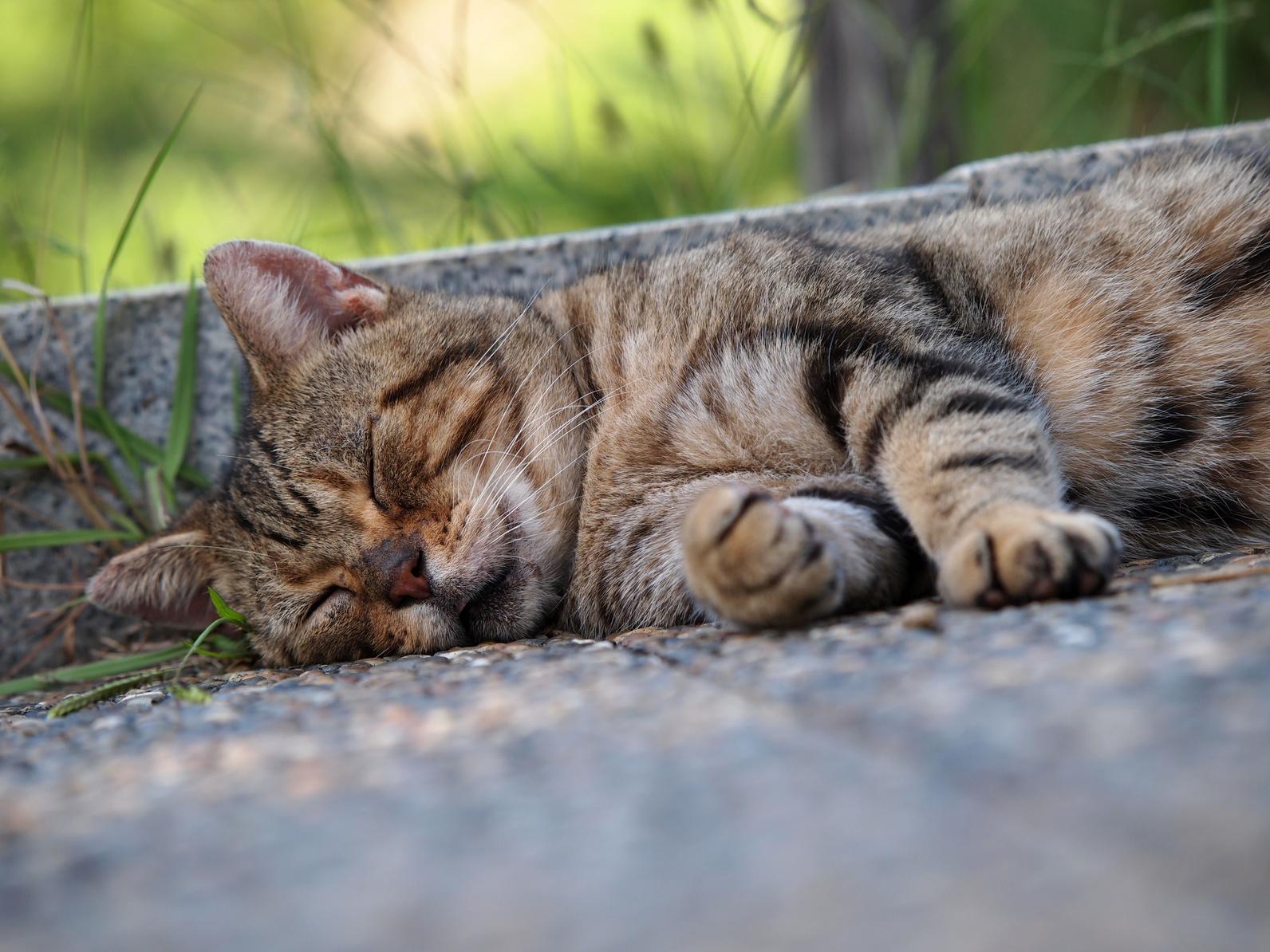 猫に「マタタビ」はいいって本当?猫が好きな植物と危険な植物