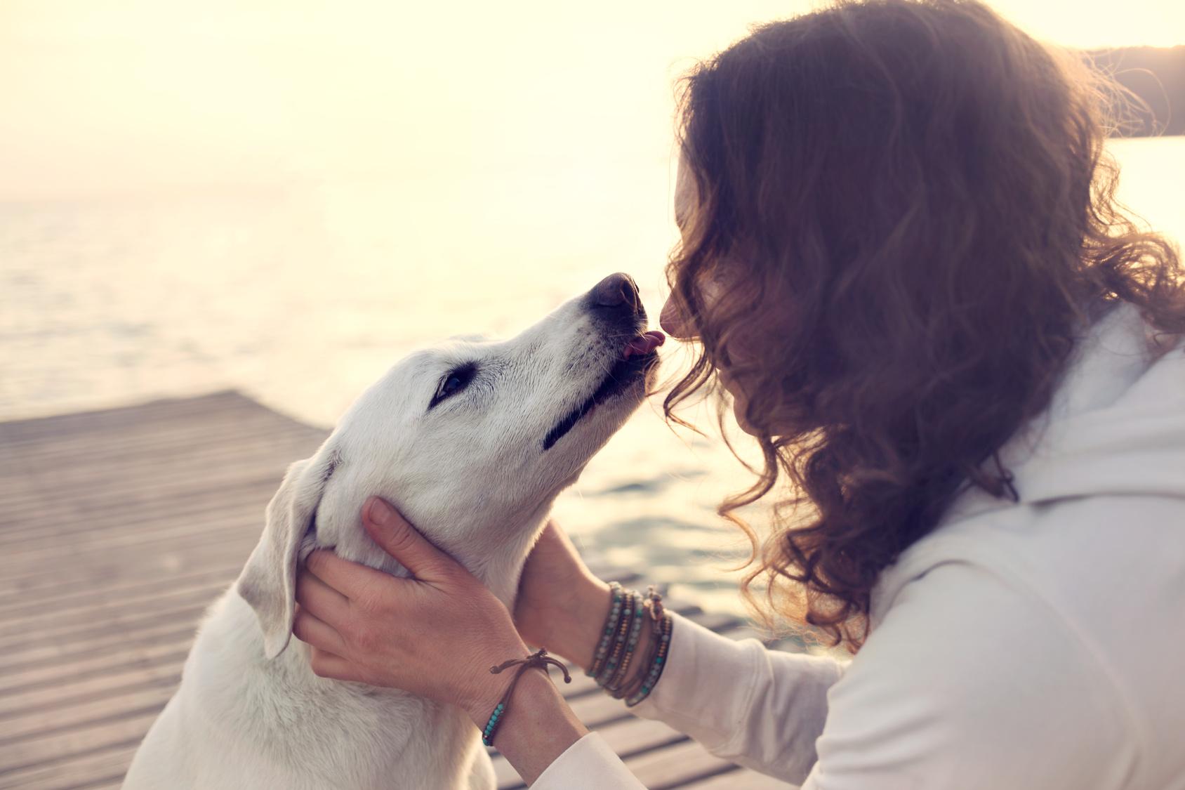 犬が飼い主の口を舐めるにはこんな愛情が隠されていた ペットタイムズ