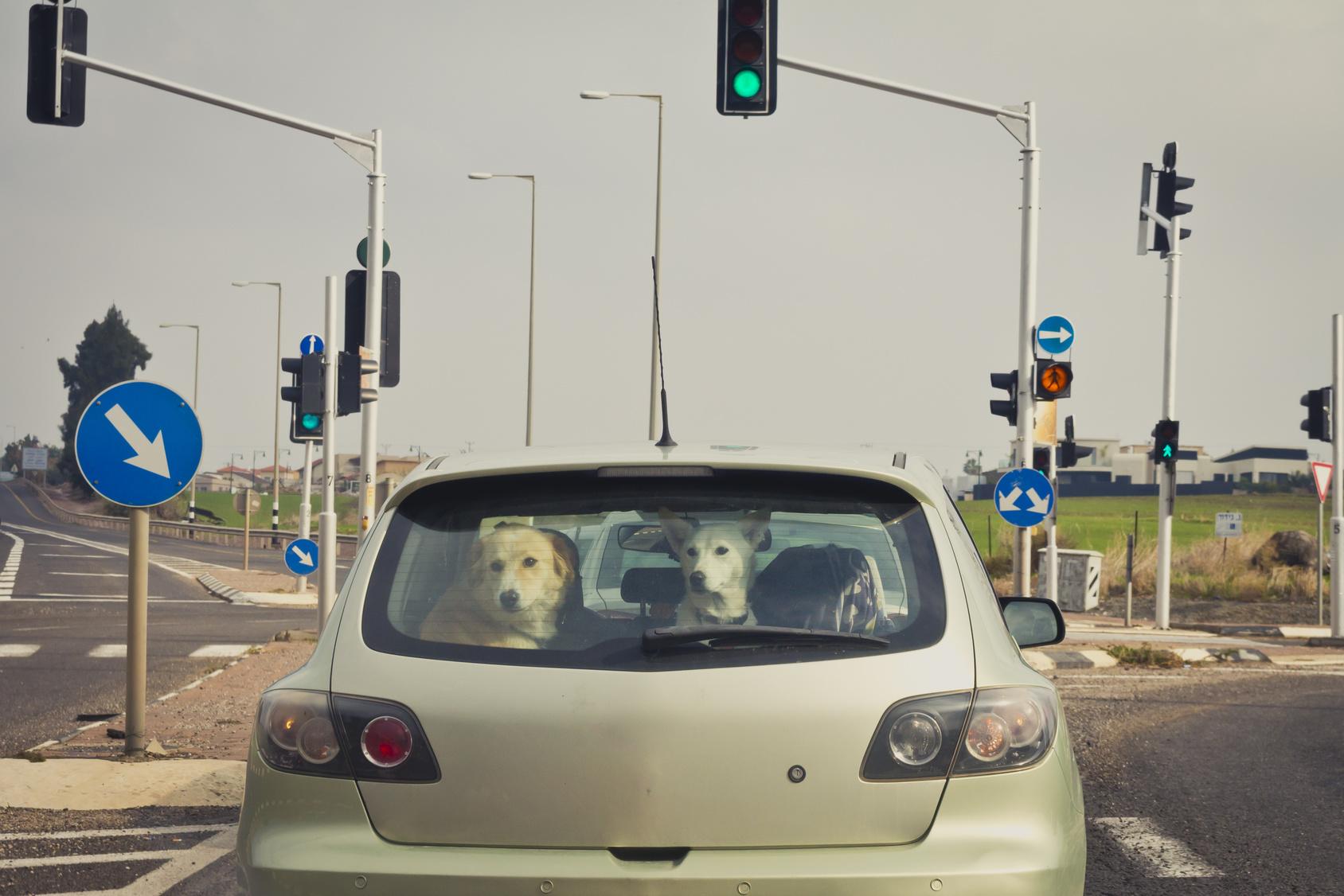 犬・猫などペットの引越し・移動にかかる費用について