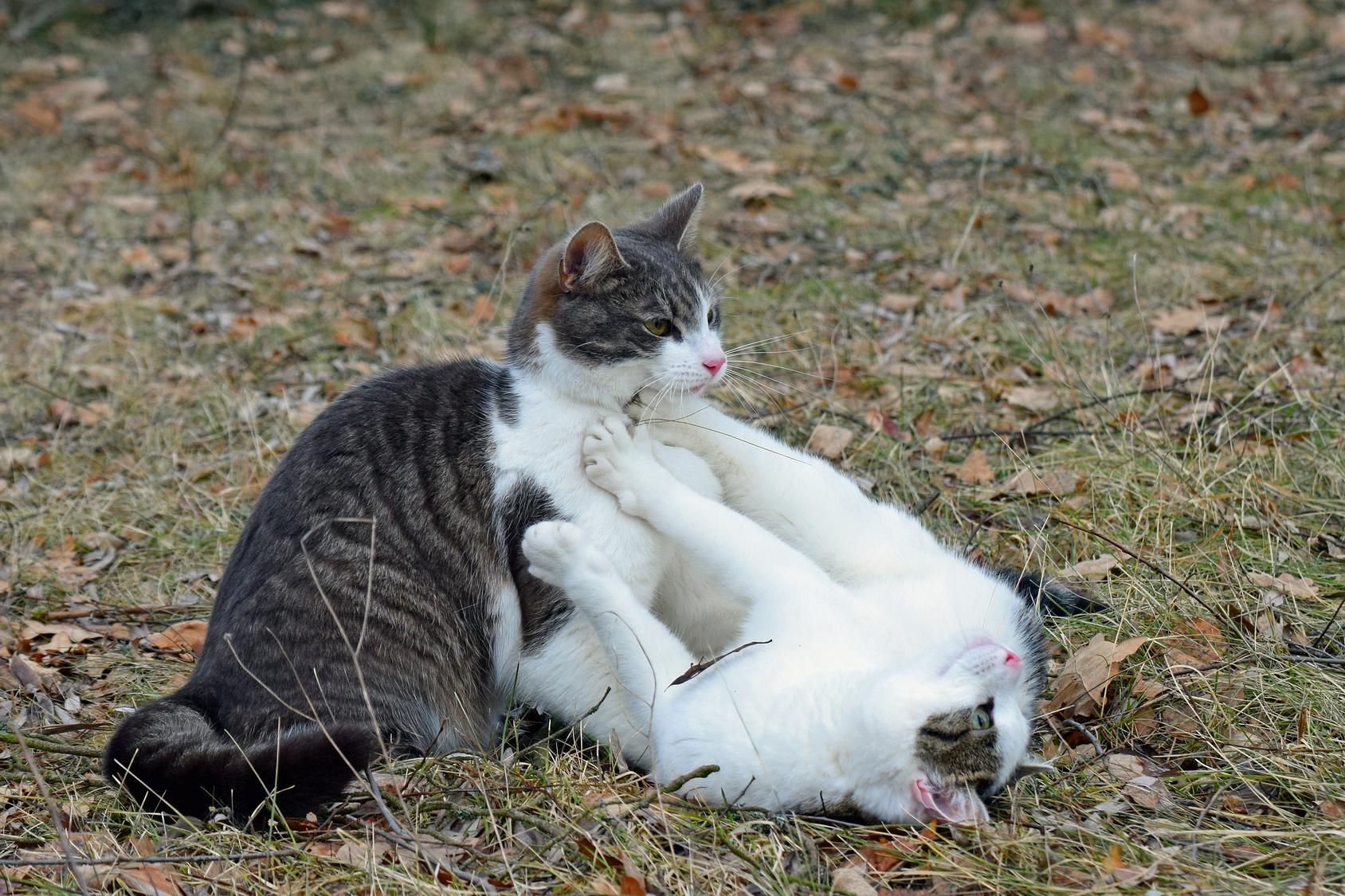 猫が飼い主の腕を噛みながら思い切りキックしてくるアレ、何?