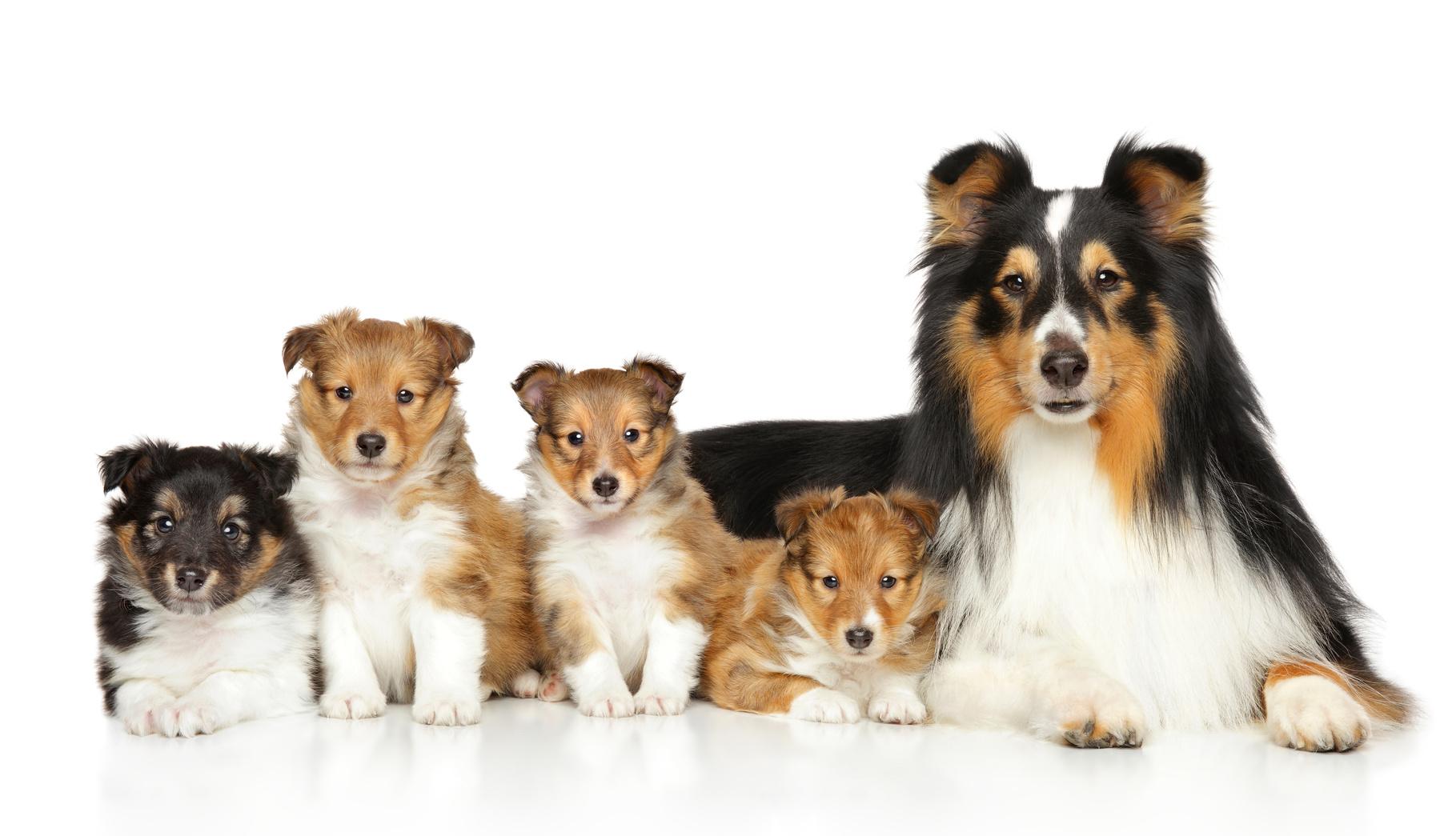 相性の合う犬ってどれだろう?自分のライフスタイルに合った犬種