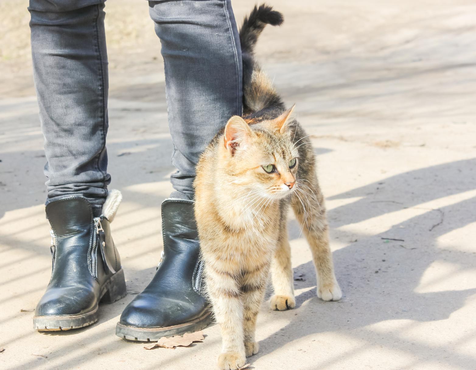 猫ちゃんのしっぽの形と動きで感情がわかる!?