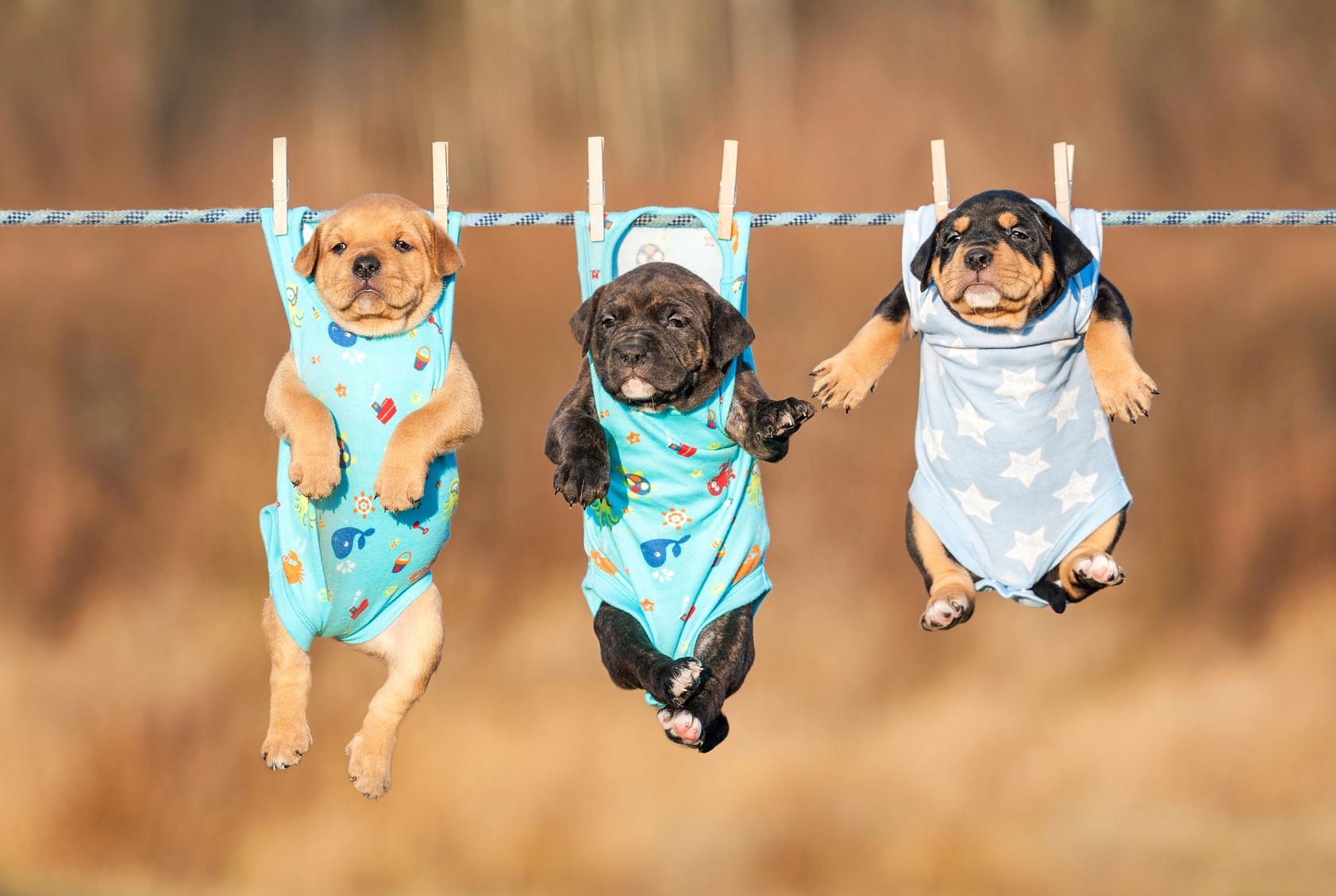 ワンちゃんだっておしゃれしたい!犬種に合わせた犬服の選び方