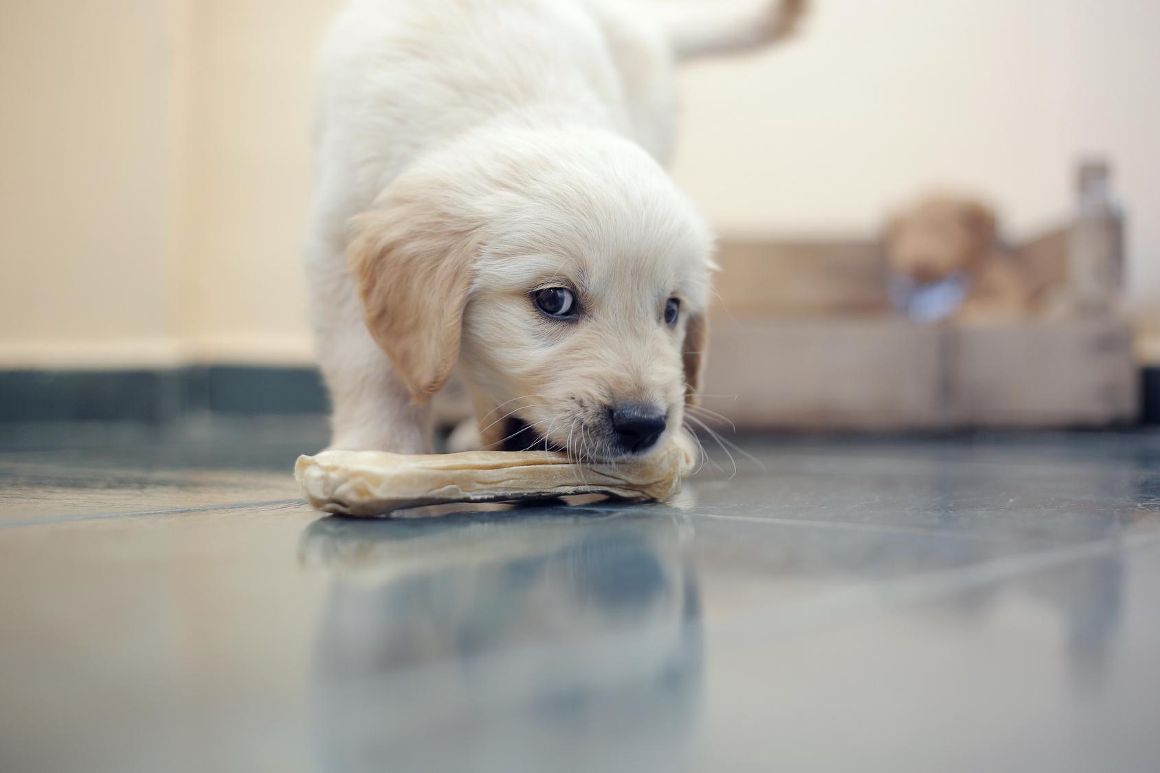 愛犬への「おやつ」のあげ方に注意しないと将来不幸にすることも!